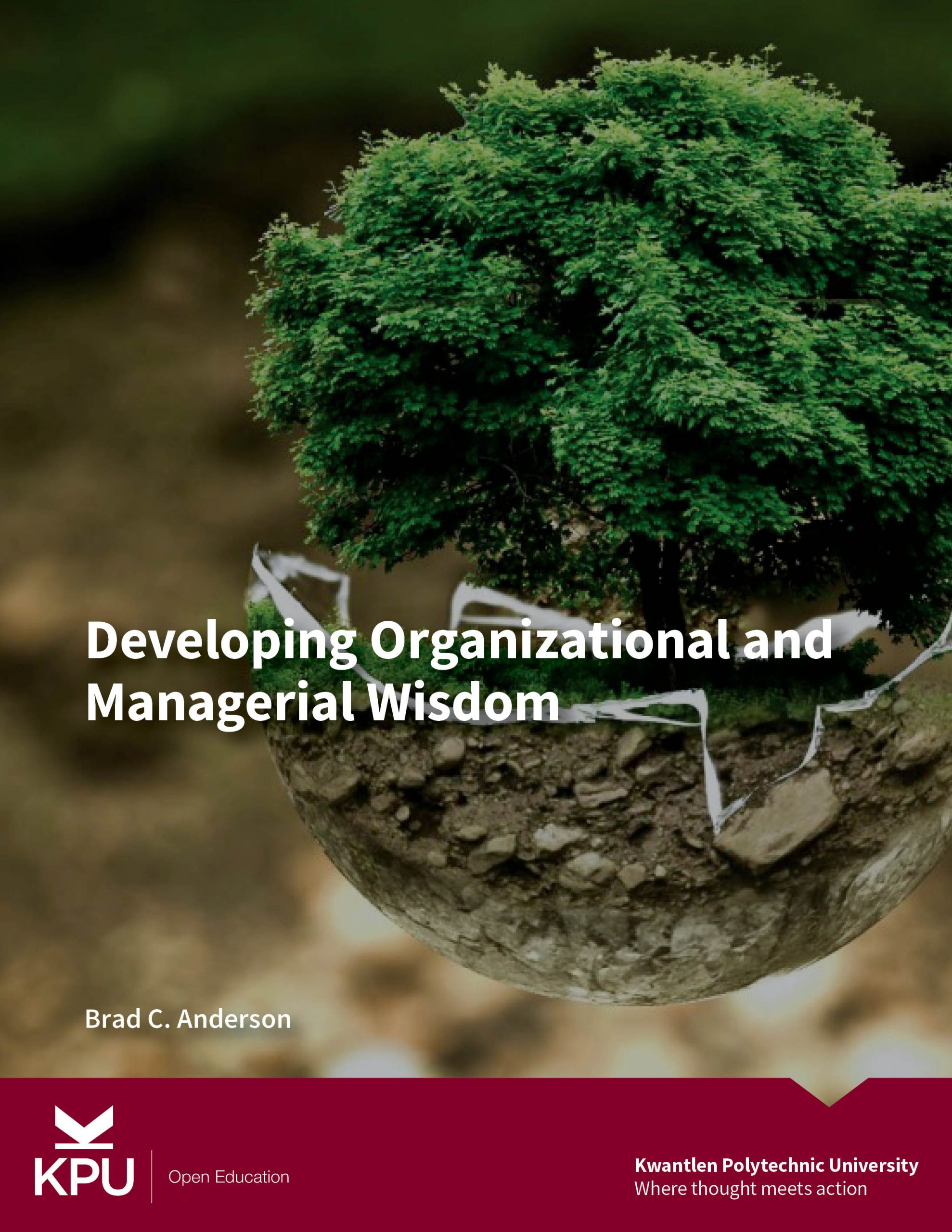 Cover image for Developing Organizational and Managerial Wisdom