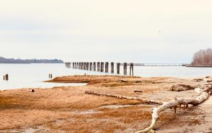 Photo of the Fraser river taken from the shoreline at low tide on Musqueam unceded territory
